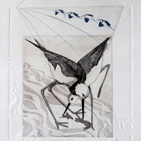 Southern River to Northern Harbour: Pied Stilts' Flight Path. Artist: Kathy Reilly
