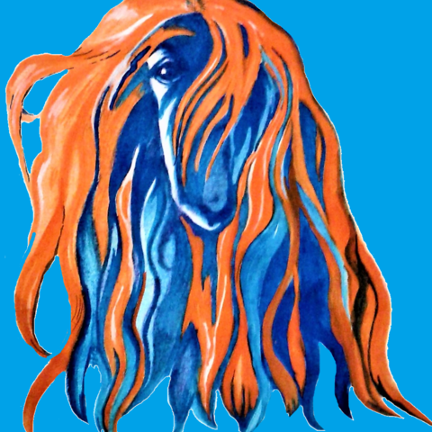 just a groovy Afghan Hound