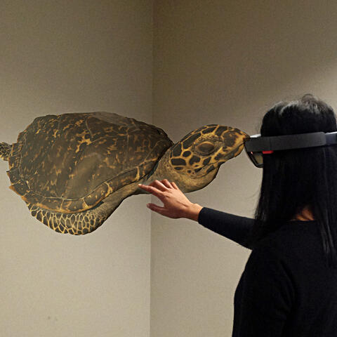 Museum staff exploring one of the recent 3D scanned models on a Microsoft HoloLens – Auckland Museum, 2016