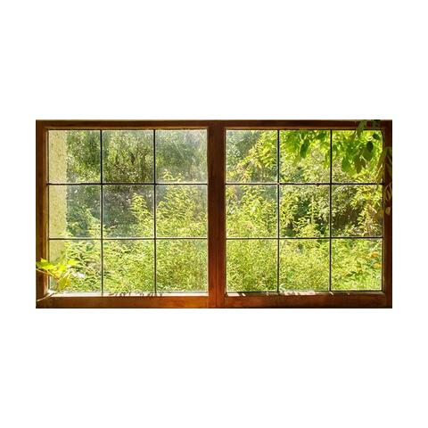 Woodland garden through a window at NZ Pacific Studio