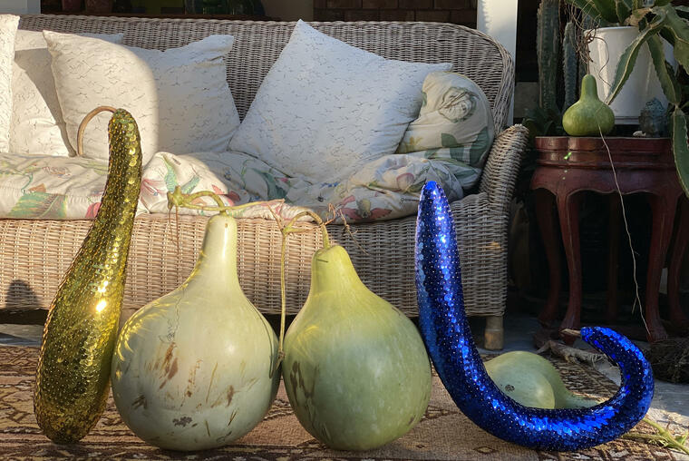 Paterson's harvested heritage Nga Puhi gourds, with two individually pinned and sequinned dried gourds. Photo courtesy of the artist.